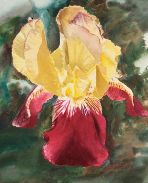 watercolor_iris