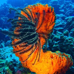 Bonair Orange Coral Paul Stockmann SQUARE